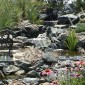Native Plantings and Waterfall