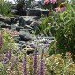 Stream with Native Perennials
